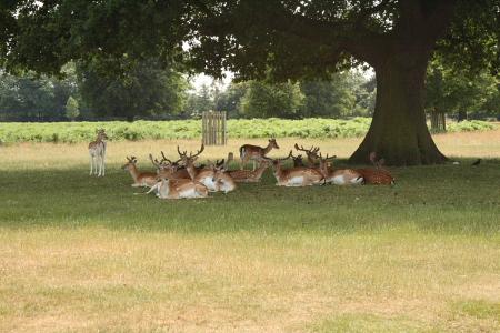 Deer enjoying the shade